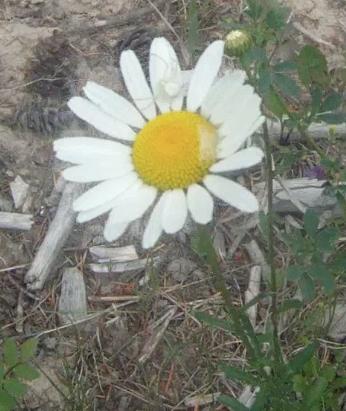 Screen Shot 2013-07-19 at 8.50.28 AM