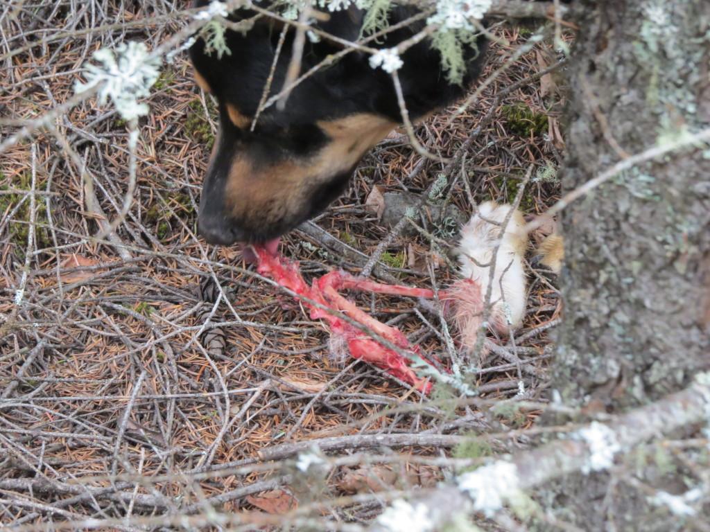 Splitting Hares