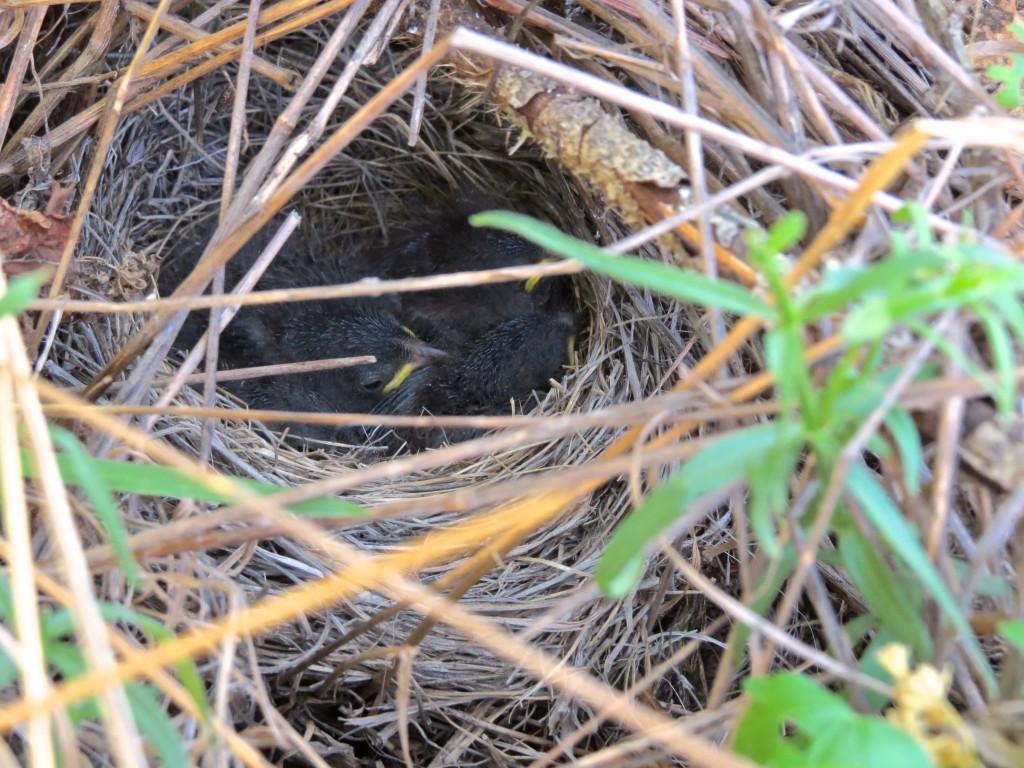 Baby Bird Update