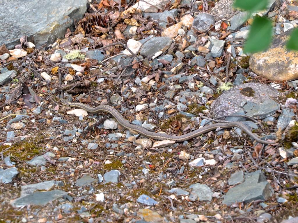 Seventh Snake