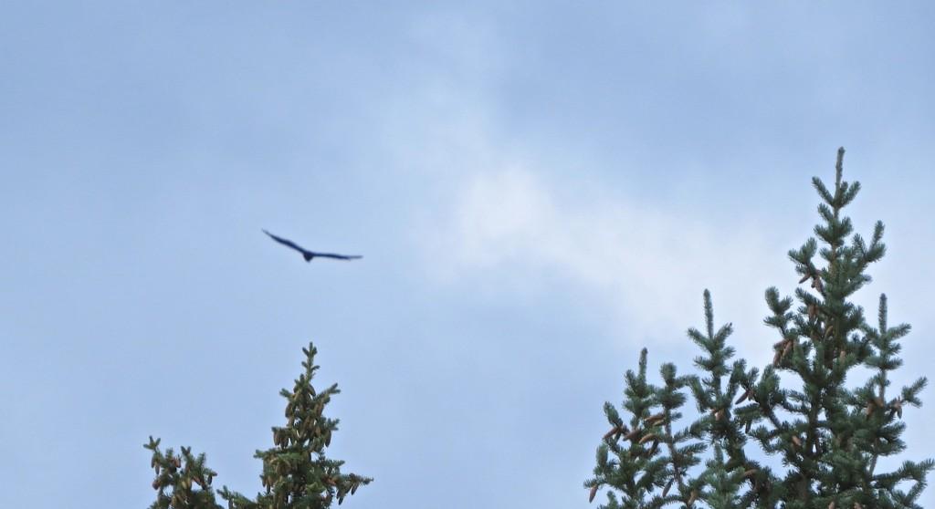 Hawk's Territory